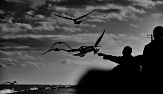 シグマのsd Quattroで飛ぶ鳥を撮ってみたら・・・