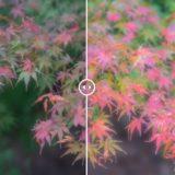 Lightroom用無料プリセットで一発で夕景・紅葉を綺麗にする方法