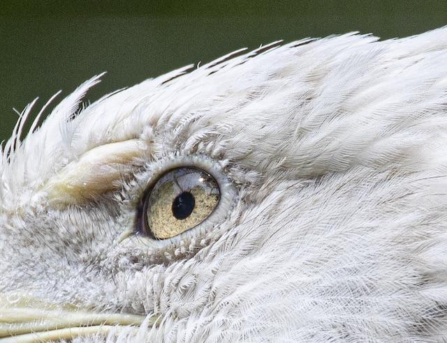 EOS R5の動物瞳AF確認用キャプチャー画像