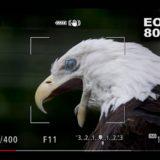 EOS R5の動物瞳AFを使って撮影された写真(RAWデータ)をチェックしてみた
