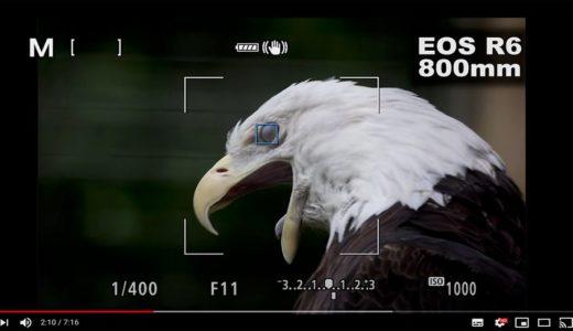 EOS R5の動物瞳AFを使って撮影された写真(RAW)をチェックしてみた